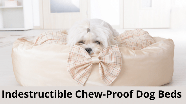Indestructible Chew-Proof Dog Beds